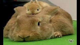 最高にかわいい赤ちゃん動物のおもしろ厳選画像集 【癒し系】 ダントツ...