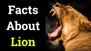 Unknown Facts About Lion