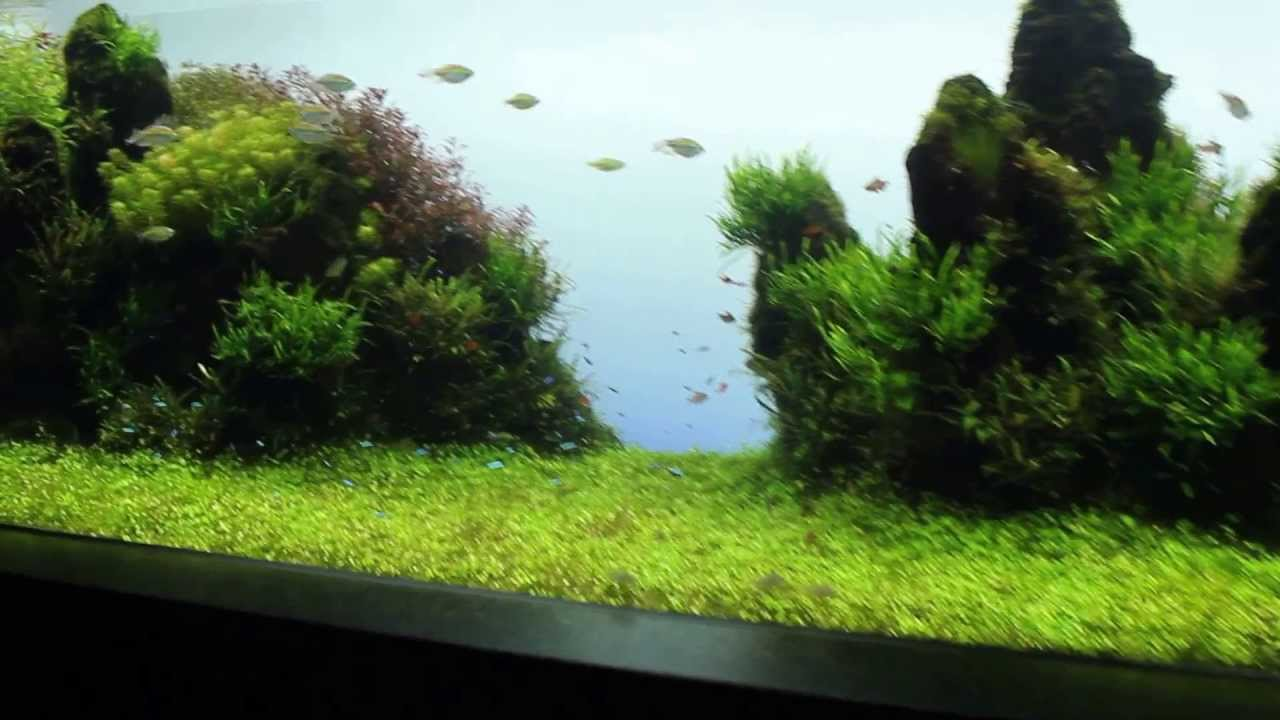 Most beautiful and famous aquarium in the world youtube Beautiful aquariums for home