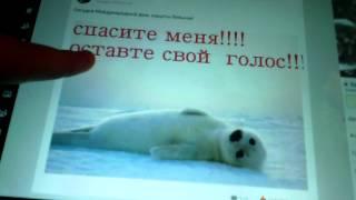 Моя страница в Одногласниках и в Вконтакте