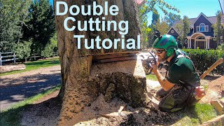 Double Cut Tutorial! How to fell a tree that's bigger than your bar.