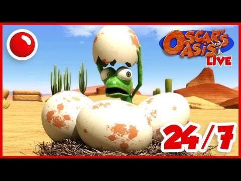 NEW Oscar's Oasis - HD Live Stream Full Episodes 24/7 🔴