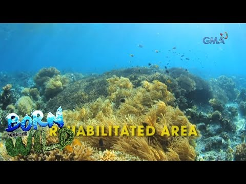 Born to Be Wild: The breathtaking beauty of Mantalip reef