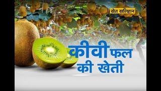 खेत खलिहान - कीवी फल की खेती