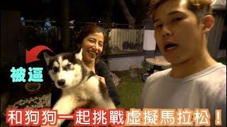 狗狗被我们一起拉着挑战18公里虚拟马拉松!