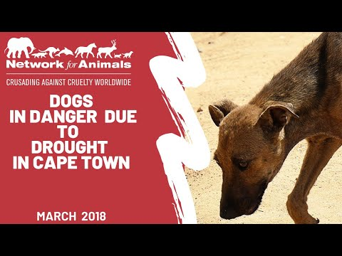 Cape Town drought dogs face dying of thirst!