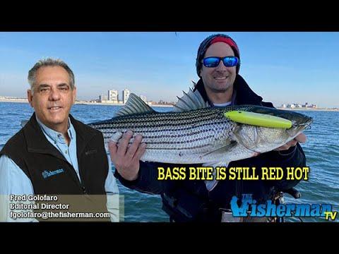November 14, 2019 Long Island Metro Fishing Report With Fred Golofaro