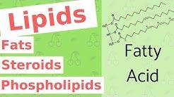 Lipids | Fats, Steroids, and Phospholipids | Biological Molecules Simplified #4