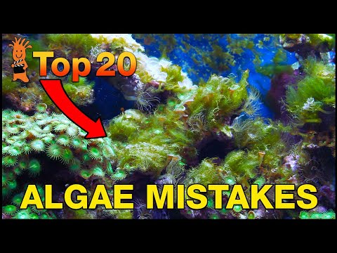 Can't beat algae in your tank? This is probably why! Top 20 Algae Fighting Mistakes