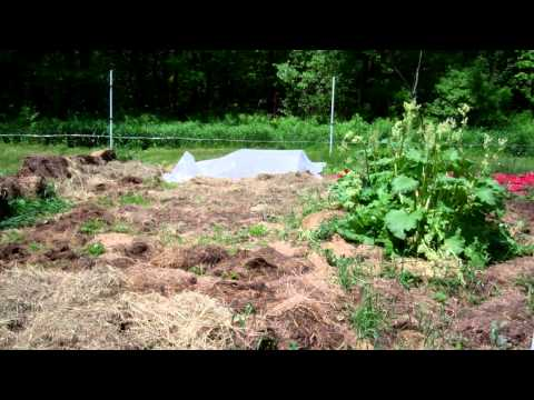garden.mp4