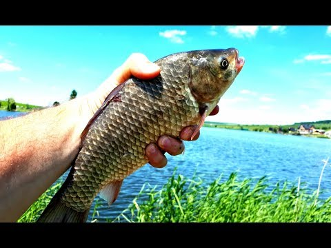 ютуб видеохостинг рыбалка карася