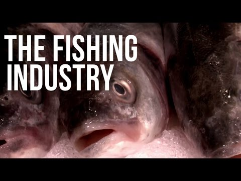 Filet Oh Fish : investigation on the fishing industry - Documentary