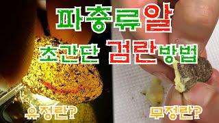 (레오파드게코도마뱀) 파충류알 유정란 무정란 초간단 검…