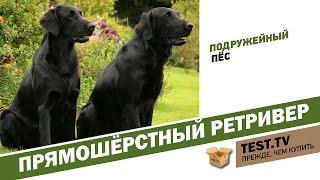 TEST.TV: Прямошёрстный ретривер подружейный пёс.