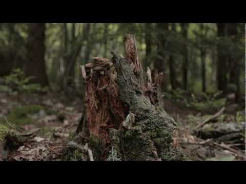 Slottsfjell 2012 - Promo