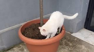 Fluffy Cat So Cute Cat Videos Cute