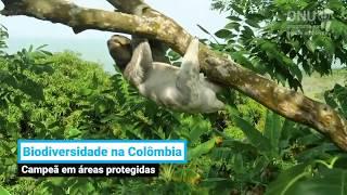 Você sabia que a Colômbia tem a maior variedade de pássaros e orquídeas do mundo?