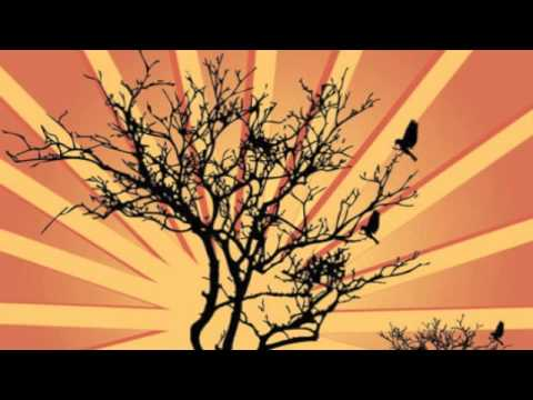 The Sunburst Band - Atlantic Forest