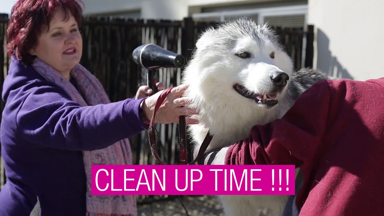 Simon Says : The Husky Recommends Shaggy Chic