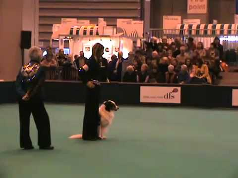 Claire Porter & Indy - OB CH Rockin Indy-Go - Scent Discrimination - Crufts 2010