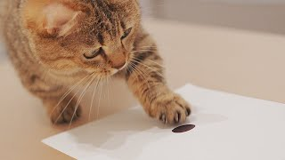 Really? If You Draw a Dot Your Cat Will Cover It 🤔