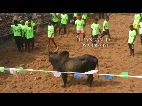 Thangam Tv Manapparai - Theerampatty Jallikattu 2018