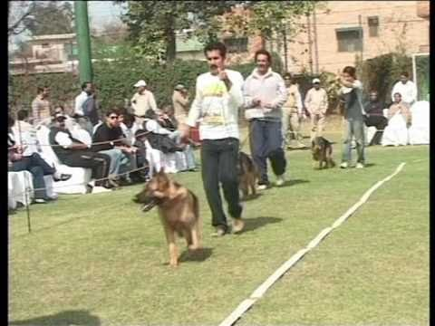 Dog Show held in Royal Palm Lahore 27-02-2011