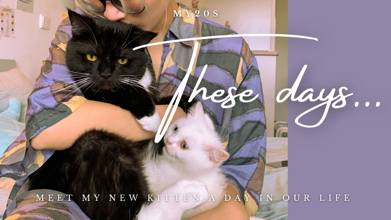 MỘT NGÀY CỦA MÌNH VỚI 2 ĐUỸ MÈO | MEET MY NEW KITTEN | GRAMMARLY | my20s