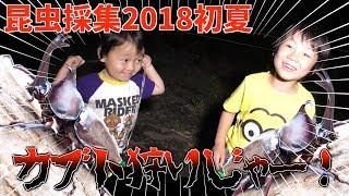 【昆虫採集2018初夏】カブトムシ・クワガタを捕まえに行こう! 夏だ!カ...
