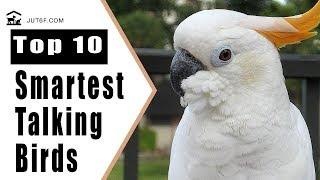 Best Talking Birds - Top 10 Smartest Talking Birds In The World