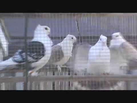 Feeding PIgeons Winter 2017 New Loft Purchase Craigslist