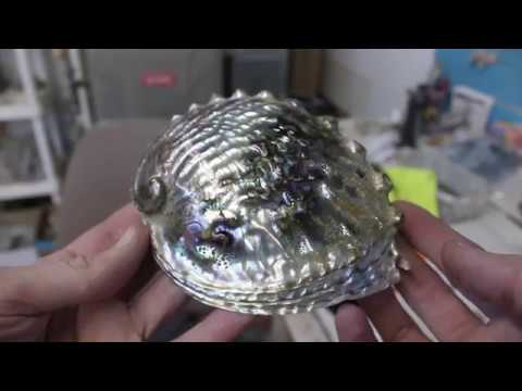 How to Polish an Abalone