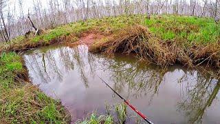 НЕВЕРОЯТНО ОТКУДА В ЭТОМ РУЧЬЕ СТОЛЬКО РЫБЫ Рыбалка на воблеры