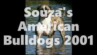 SOUZA'S AMERICAN BULLDOGS