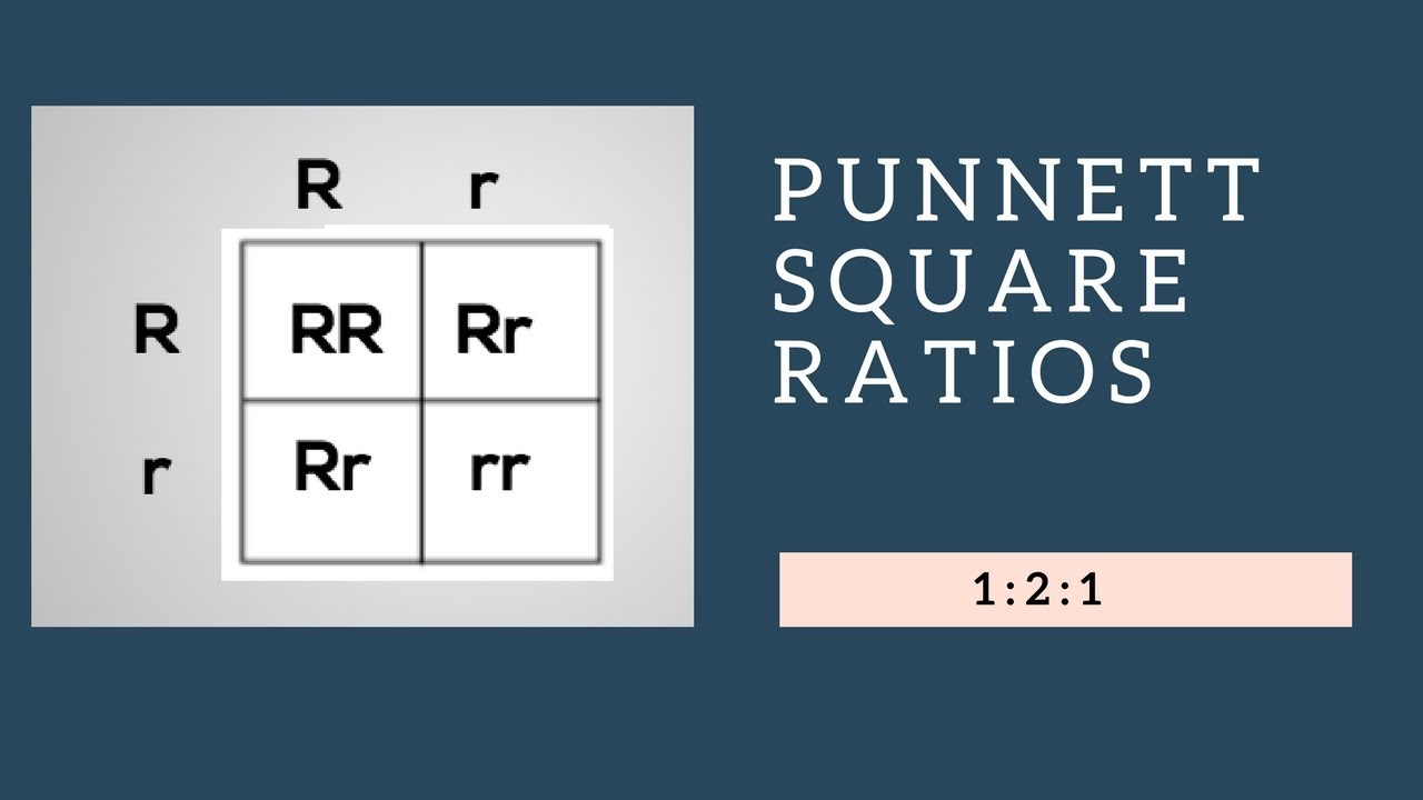 Genotypic Ratios and Phenotypic Ratios for Punnett Squares ...