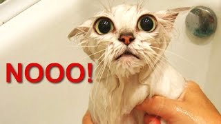 """Talking Cats Saying """"No"""" to Bath - A Funny Cats In Water Compilation [PART 2]"""