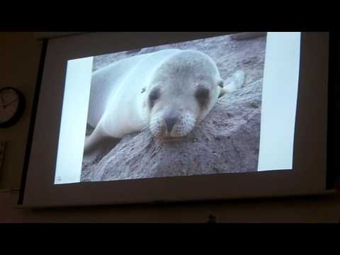 Mr  Willis' Awesome Marine Biology Book   Chapter 31   Pinnipeds