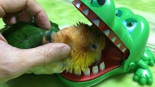 【灰鸚鵡阿福】「灰鸚鵡阿福」#灰鸚鵡阿福,好笑????可愛又有...