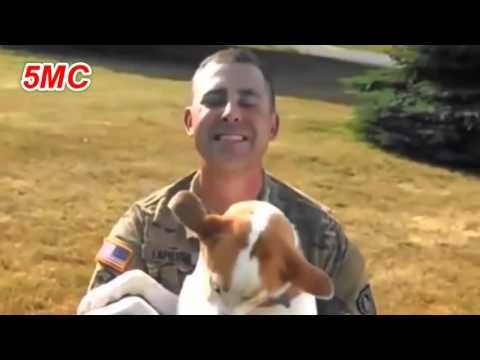 Dogs Welcoming Soldiers Home Compilation 2015 [HD] 5MC