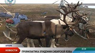 Превентивные меры. В Ненецком округе идет профилактика сибирской язвы