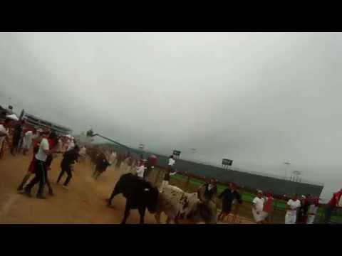 The Great Bull Run 2014