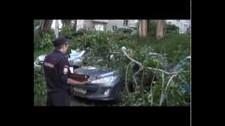видео В Энергодаре дерево упало на машину