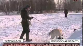 Собаки несут воинскую службу