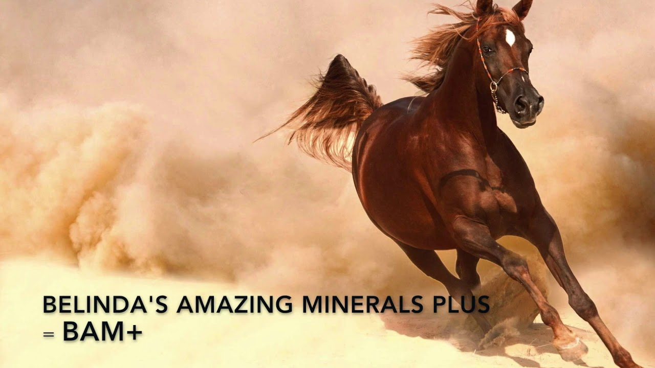 Belinda's Amazing Minerals Plus - Belinda's Natural Animal