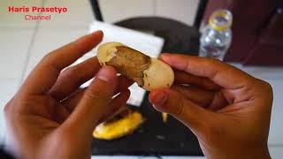 Gambar cover Menanam Biji Benih Mangga Dalam Media Tisu Basah Yang Di Bungkus Plastik (Growing Mango Seed Tissue)