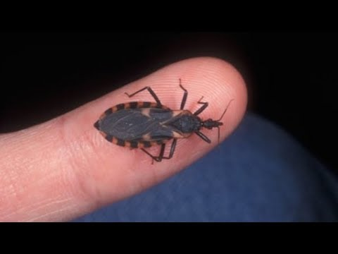 SMALLEST Animals That Can Actually KILL You!