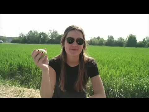 Perché mangiare la Curcuma? from YouTube · Duration:  1 minutes 3 seconds