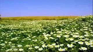 اسماء و اشكال النباتات الصحراوية