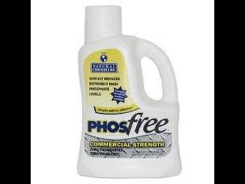 Swimming Pool Phosphate Remover Myths Facts Revealed Youtube