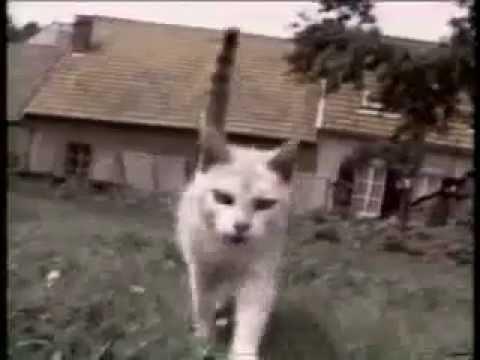 Les Chats En Algerie Mdr